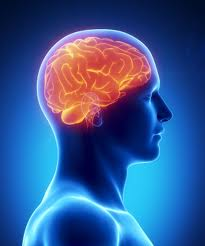Diet rich in vitamins and fish oils helps keep elderly brains healthy
