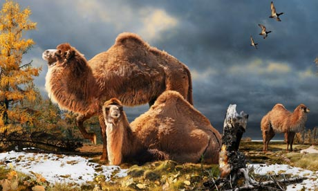 Remains of extinct giant camel discovered in Canada's High Arctic