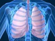 How human airways clear mucus out of lungs