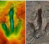 'Footprints' show carnivourous dinosaurs' strolled German beach 142 mln yrs ago