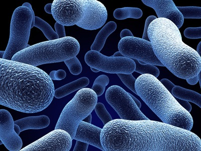are using computers to find how one strain of dangerous bacteria