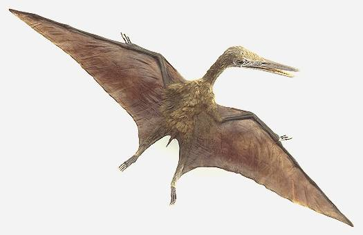 Washington  Jan 19  Pterosaurs-dinosaur-era flying reptiles-were    Dinosaurios Carnivoros Nombres